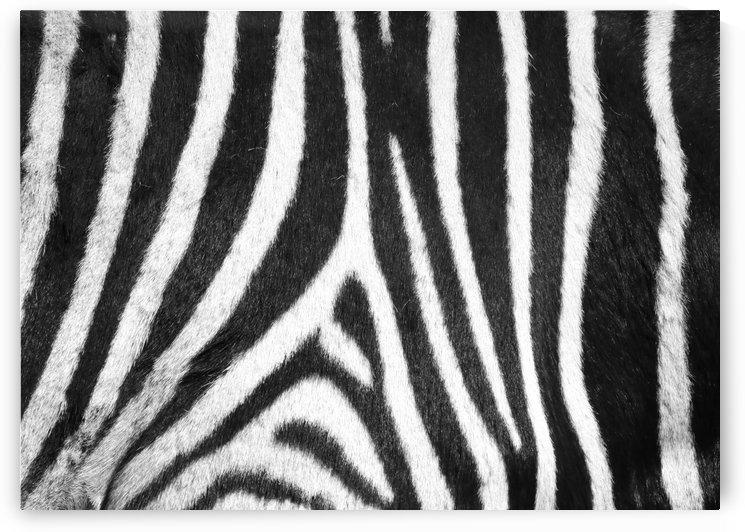 Zebra Pattern E 1514 by Thula-Photography