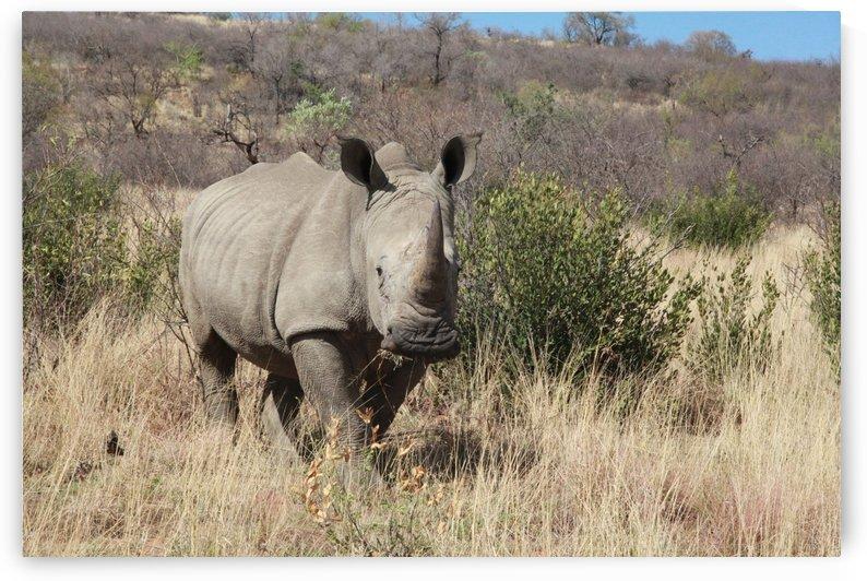 White Rhino 247 by Thula-Photography
