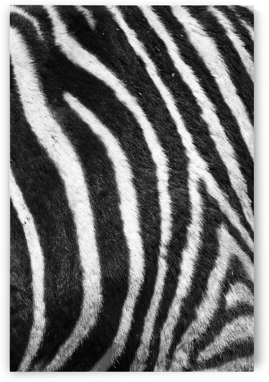 Zebra Pattern G 11074 by Thula-Photography