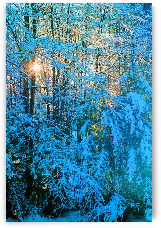 Blue Indigo Morning Snow by FoxHollowArt