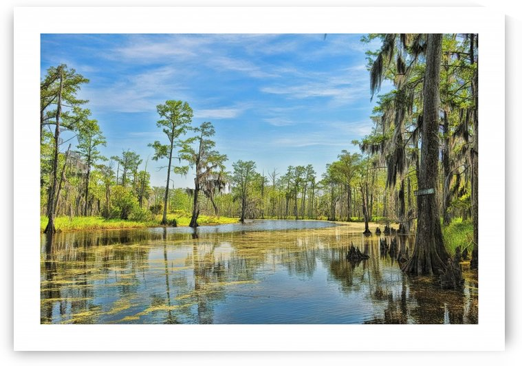 Down on the Bayou - HDR - White Border by Digicam
