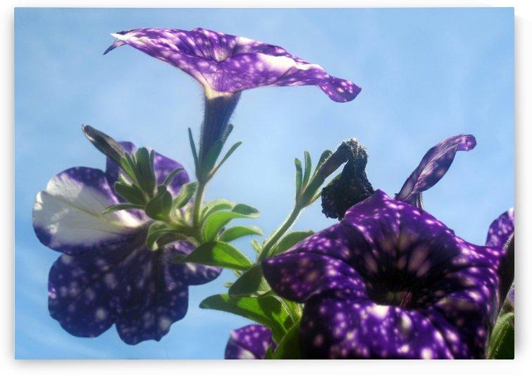 Violet Flowers 5 by Jaeda DeWalt