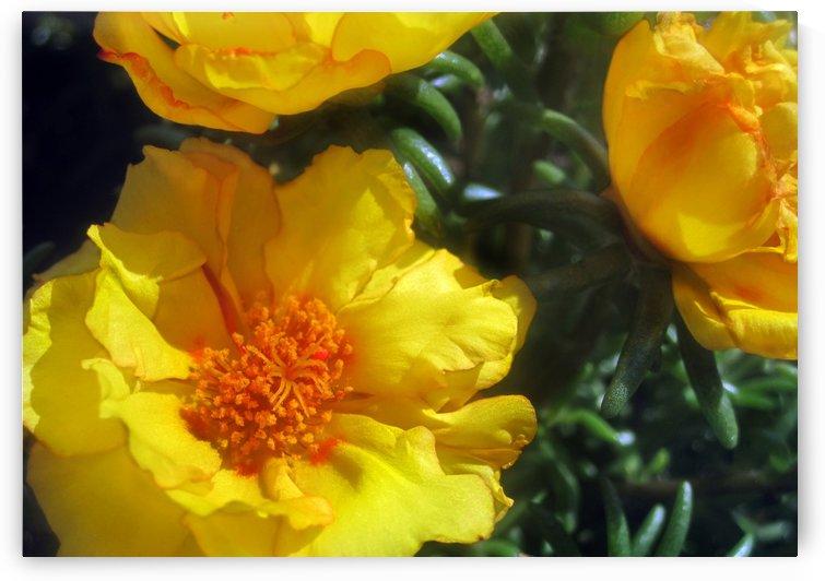 Summer Flowers 1 by Jaeda DeWalt