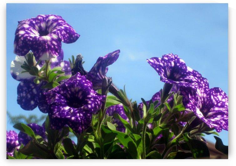Violet Flowers 4 by Jaeda DeWalt