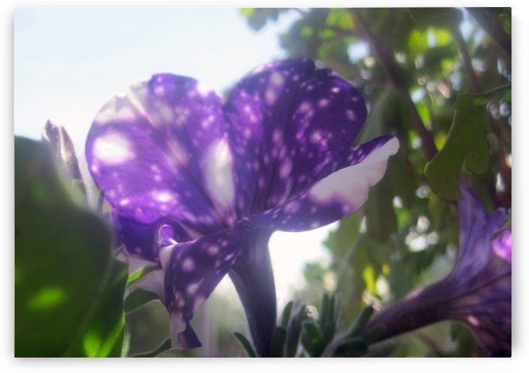 Violet Flowers 7 by Jaeda DeWalt