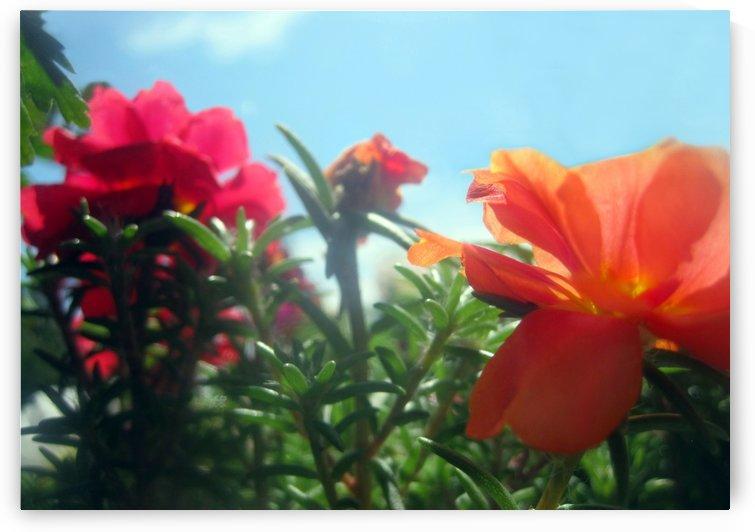 Garden Flowers  by Jaeda DeWalt