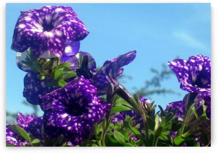 Violet Flowers 6 by Jaeda DeWalt