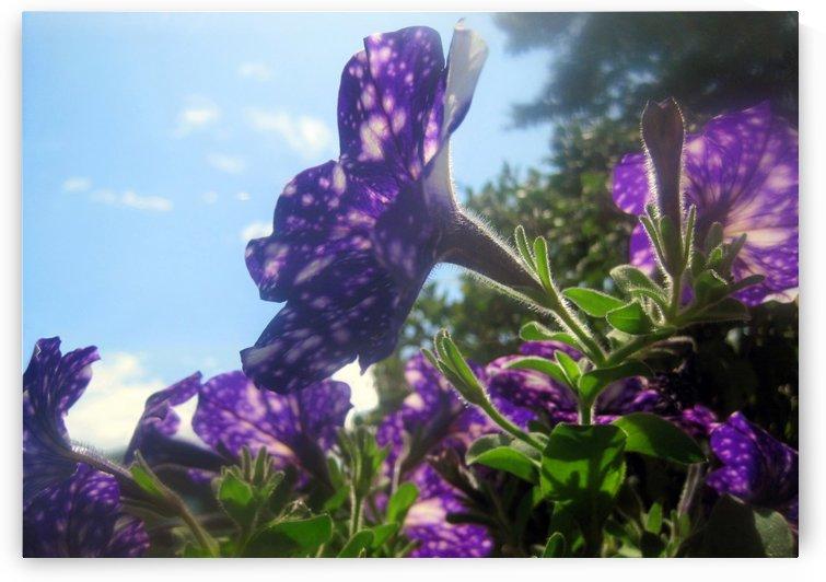 Violet Flowers 3 by Jaeda DeWalt