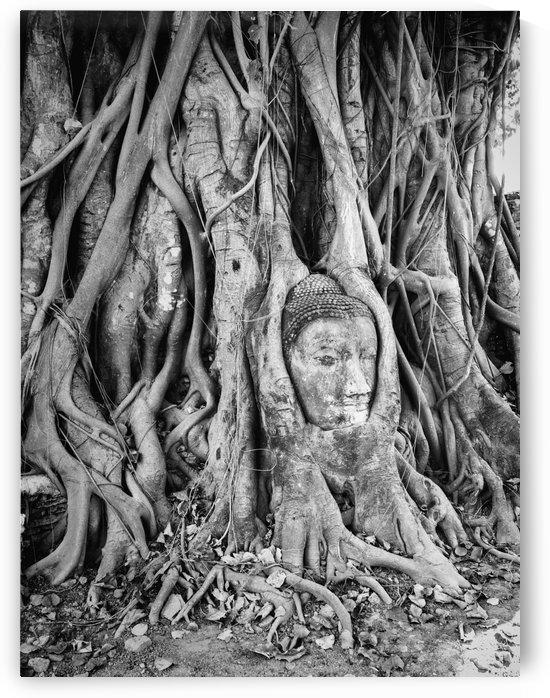 The captive Buddha of Ayutaya by Radu Juster Photography