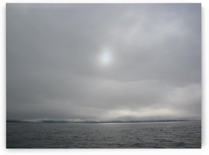 Foggy Pacific Sun by Dee Vanggo