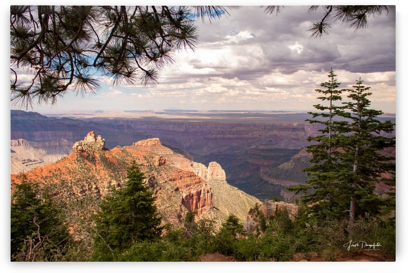 Grand Canyon From the Trees by Gryphon Photography