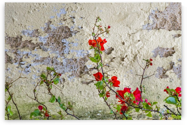 Red Flowers Over Damaged Wall by Daniel Ferreia Leites Ciccarino