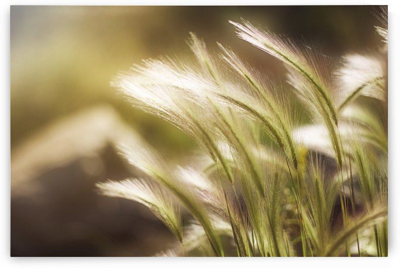 Ethereal Grass by Kathryn Stone