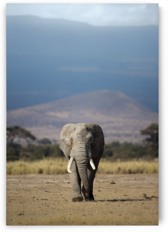 Guardian of Kilimanjaro  by Gurdyal Singh