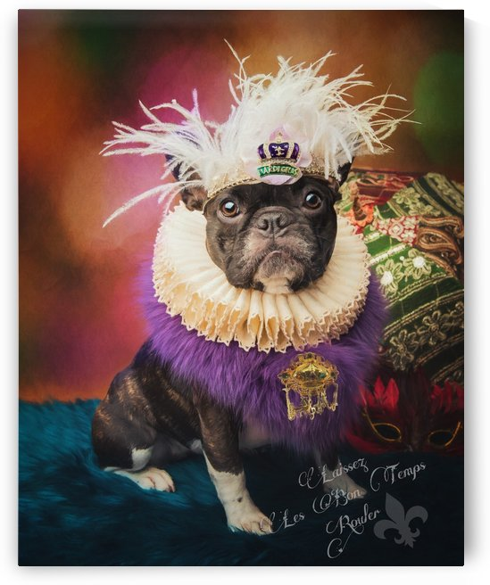 Mardi Gras Dog by Elizabeth Luce Photography