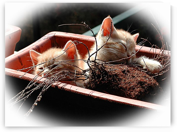 Kitten Flowers by Dorothy Berry-Lound