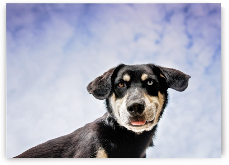 goofy dog by Elizabeth Luce Photography
