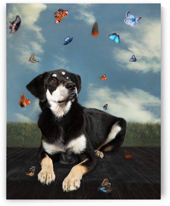 kiro and the butterflies by Elizabeth Luce Photography