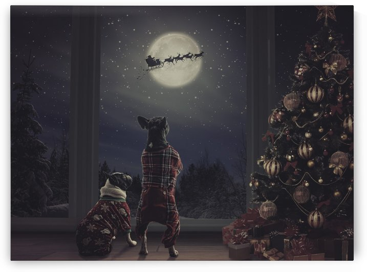 christmas dogs by Elizabeth Luce Photography