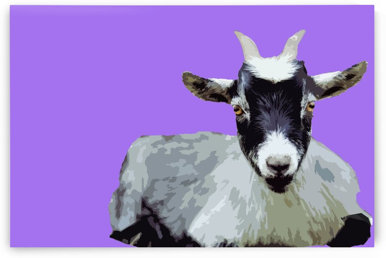 Goat popart purple by Elizabeth Luce Photography