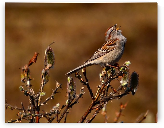 TreeSparrow by Mike Ross