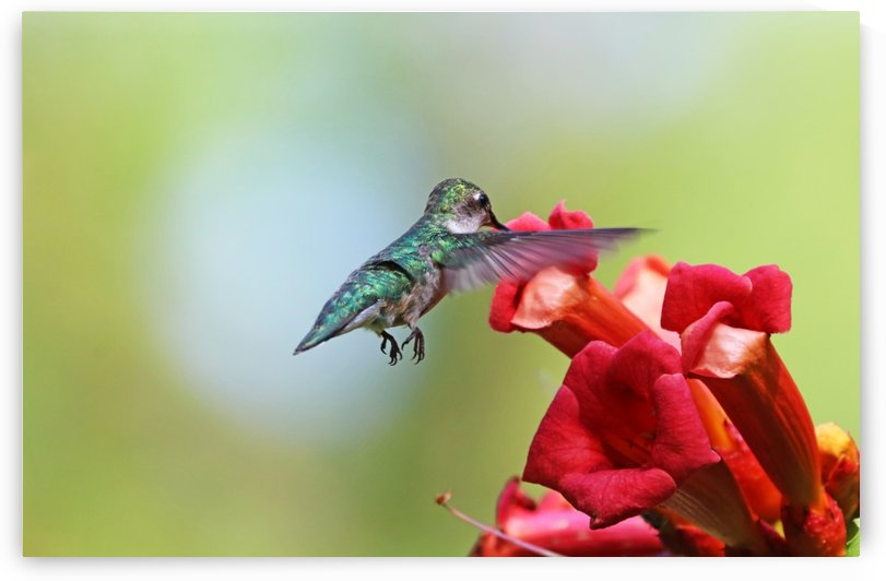 Feeding On The Trumpets by Deb Oppermann