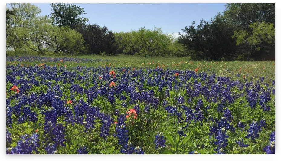 Texas Bluebonnet Afternoon by Ryan Hix