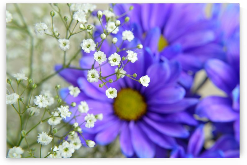 Babys Breath on Blue Daisy by Michelle K Wood