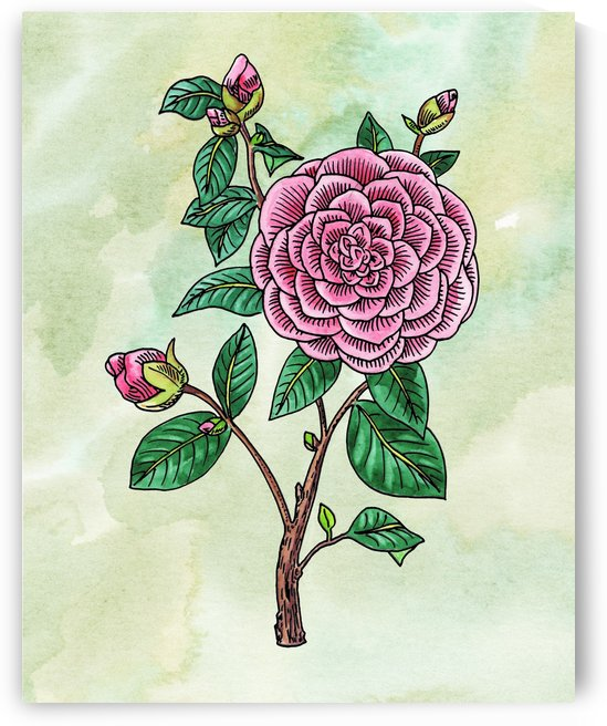 Botanical Watercolor Japanese Camellia Flower  by Irina Sztukowski