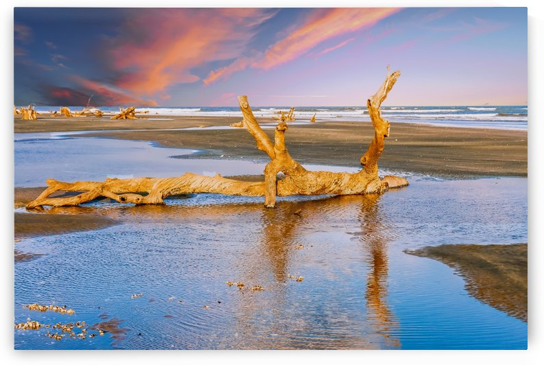 Driftwood at Sunset with Tidal Pools by Darryl Brooks