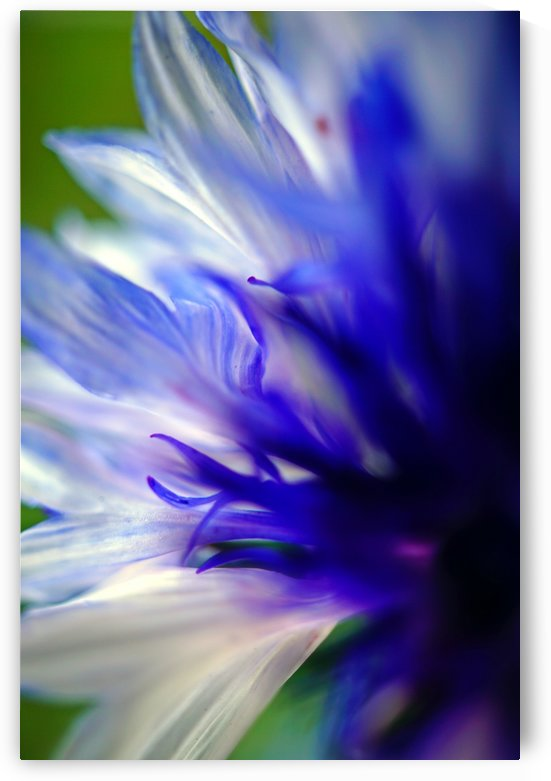 Abstract Pop Color Flower Photography 07 by Richard Vloemans Macro Photography