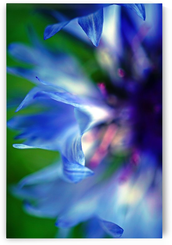 Abstract Pop Color Flower Photography 16 by Richard Vloemans Macro Photography