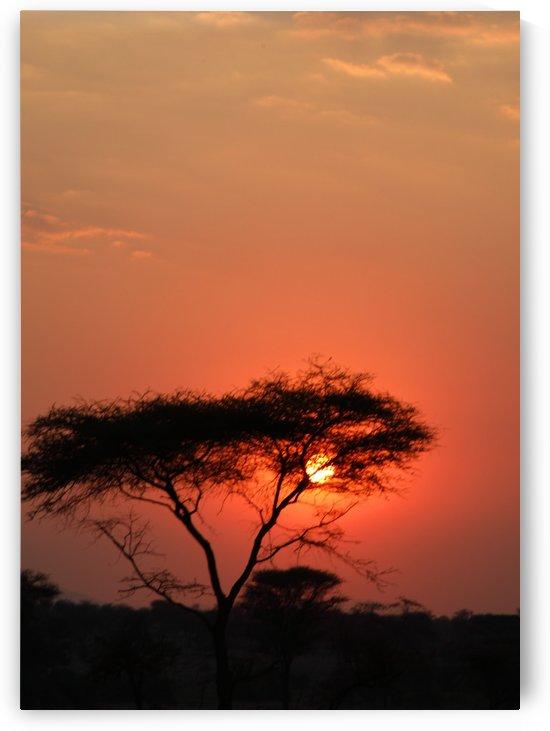 African Sunset by Eliot Scher
