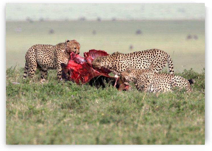 Cheetah Kill by Eliot Scher