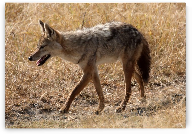 Day of the Jackal by Eliot Scher