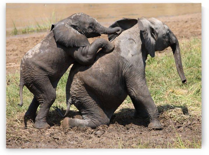 Elephant Mud Wrestle by Eliot Scher