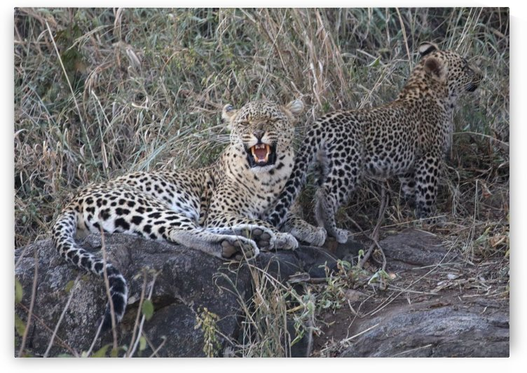 Leopard Mom and Cub by Eliot Scher