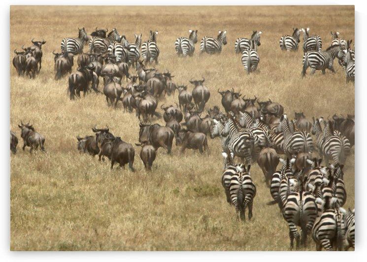 Migration by Eliot Scher