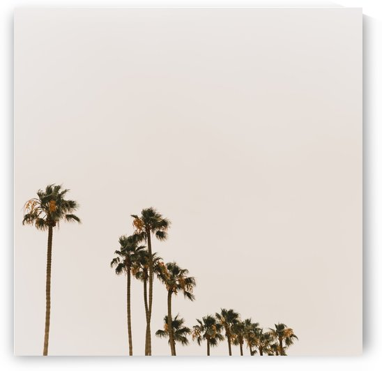 Palm Trees in San Diego by Aaron Rodriguez