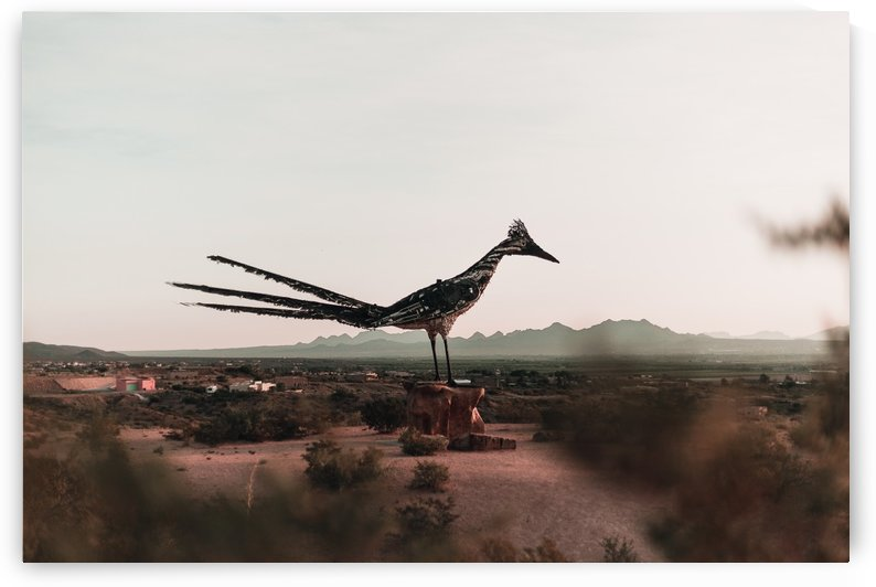 Recycled Road Runner Las Cruces NM by Aaron Rodriguez