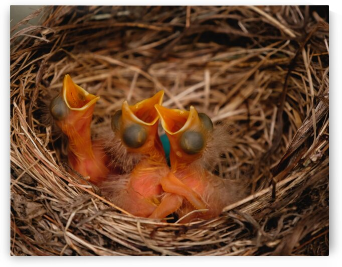 Hatched and Hungry by Dave Therrien