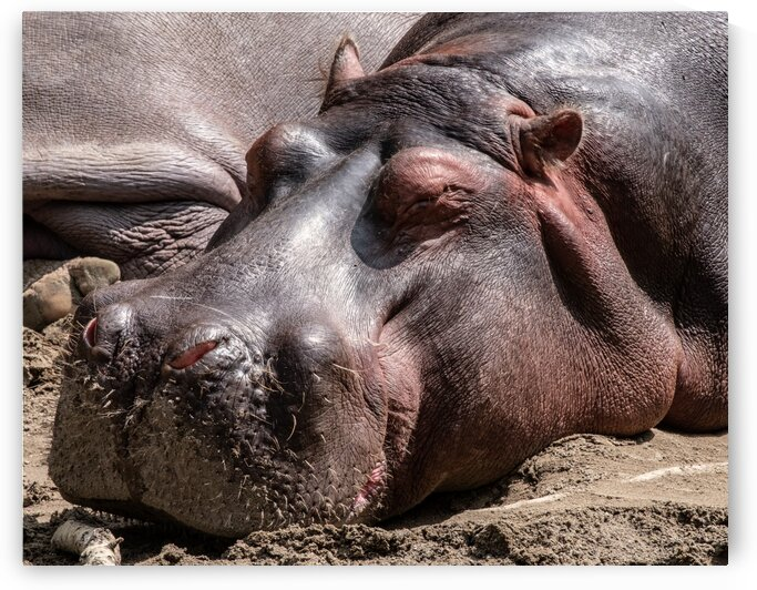 Pooped by Dave Therrien