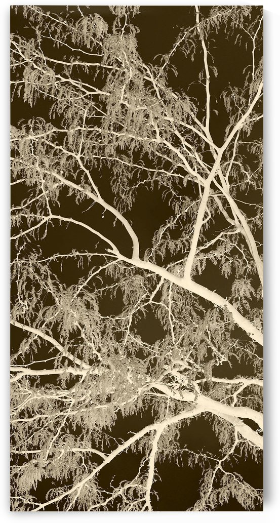 Lacey Sepia Tree left side by Ellen Barron O-Reilly