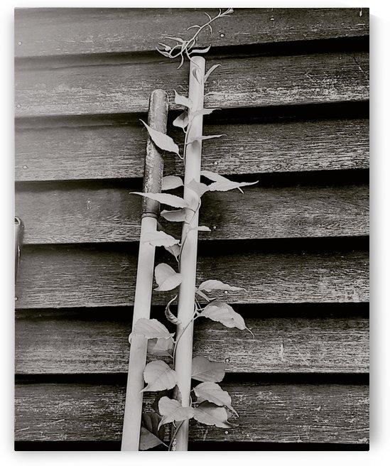 Garden tool vines by Amber Norcross