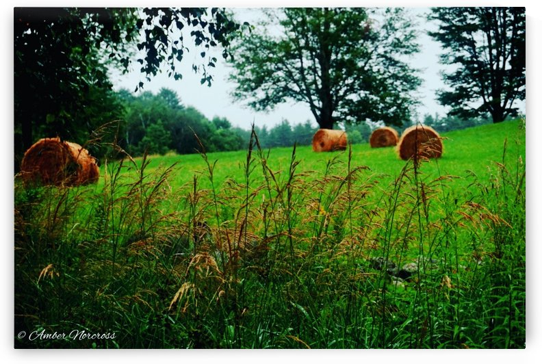 Round bales by Amber Norcross