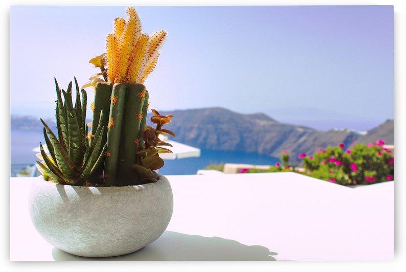 Cactus  by Bentivoglio Photography
