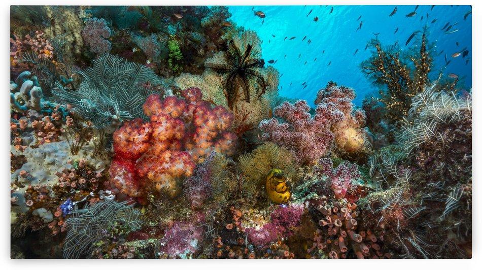 reef 02 by Sylvain Girardot