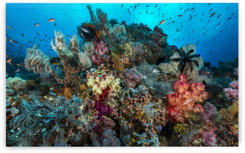 reef 01 by Sylvain Girardot