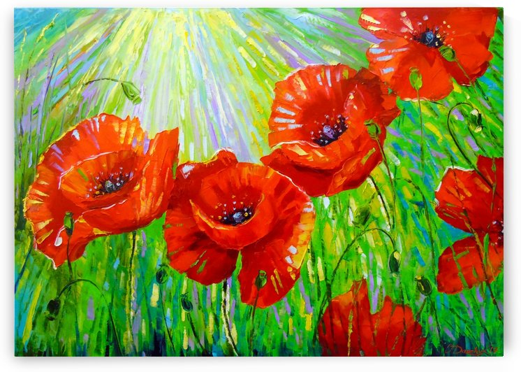 Poppies in sunlight by Olha Darchuk