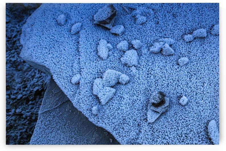 Frost by Ilir Dugolli